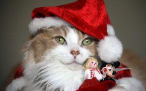gato-disfrazado-de-santa-claus-67